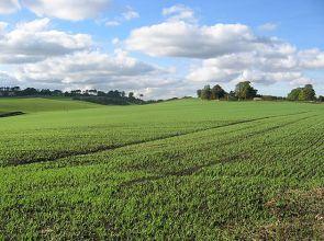 Ūkininkams nebus taikomos sankcijos už vėlavimą